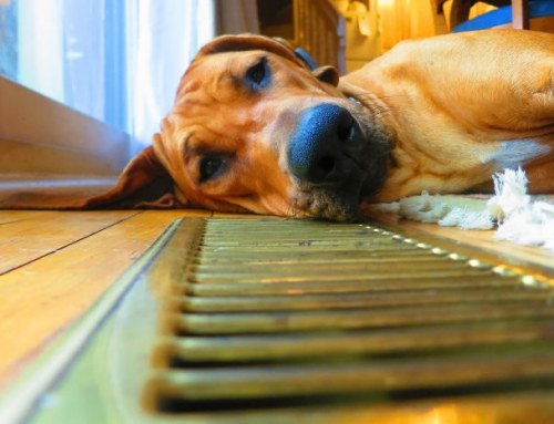 Avoid Unnecessary AC Service With These Pet Owner Tips