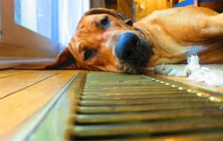 ac service tips for pets
